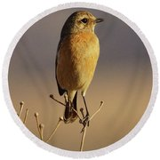 African Stone Chat Female Round Beach Towel