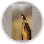 African Stone Chat Round Beach Towel