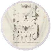 African Termites And Their Anatomy Round Beach Towel by W Wagenschieber