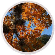 Afternoon Light On Maple Leaves Round Beach Towel