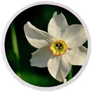 Afternoon Of Narcissus Poeticus. Round Beach Towel