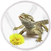 Agama And Dandelion  Round Beach Towel