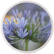 Agapanthus Africanus - Lily Of The Nile 2 Round Beach Towel
