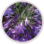 Agapanthus Flowers In Purple - New And Old Round Beach Towel