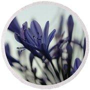 Agapanthus - Love Flower -2  Round Beach Towel
