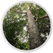 Agathis Borneensis Tree Round Beach Towel