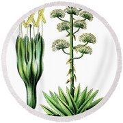 Agave Americana, Common Names Century Plant, Maguey Or American  Round Beach Towel