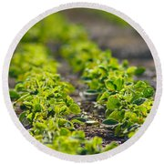 Agriculture- Soybeans 1 Round Beach Towel