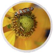 Ailanthus Webworm Moth #5 Round Beach Towel