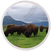 Alaska Wood Bison Round Beach Towel