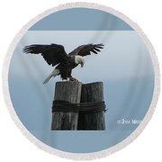 Alaskan Bald Eagle Round Beach Towel