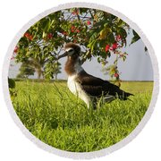 Albatross 1 Round Beach Towel