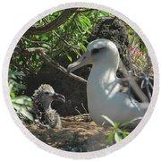 Albatross Mom And Baby Round Beach Towel