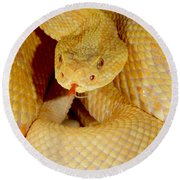 Albino Brazilian Rattlesnake Round Beach Towel