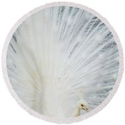 Albino Peacock Round Beach Towel