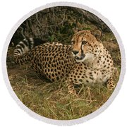 Alert Cheetah Round Beach Towel