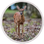 Alert Fawn Deer In Shiloh National Military Park Tennessee Round Beach Towel