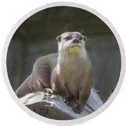 Alert Otter Amblonyx Cinerea Round Beach Towel