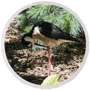 All Clear - Bird Looking Under Legs Round Beach Towel
