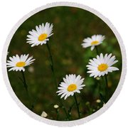 All The Daisies Round Beach Towel