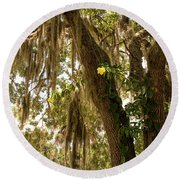 Allamanda And Oak Tree Round Beach Towel