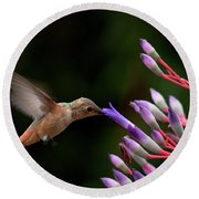 Allen's Hummingbird At Breakfast Round Beach Towel by Mike Herdering