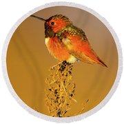 Allen's Hummingbird II Round Beach Towel