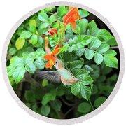 Allen's Hummingbird In Cape Honeysuckle Round Beach Towel