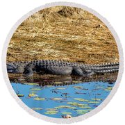 Alligator In The Sun Round Beach Towel