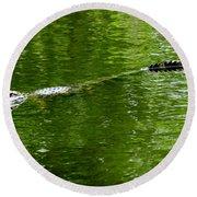 Alligator In Wait Round Beach Towel