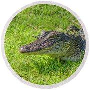 Alligator Up Close  Round Beach Towel by Allen Sheffield