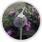 Allium Blossom With Cap Round Beach Towel