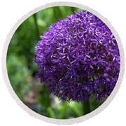 Allium Gladiator Closeup Round Beach Towel