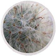 Allium Sativum Round Beach Towel