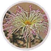 Allium Sunburst Pink/purple Tips On White Petals Yellow Center 2 10232017 Colorado  Round Beach Towel
