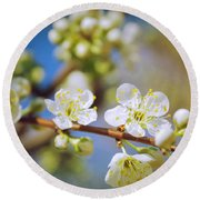 Almond Tree Branch Round Beach Towel