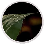 Aloe And Water Droplets Round Beach Towel