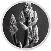 Aloe Maculata Stalk Round Beach Towel