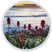 Aloe Vera In Flower At The Seaside Round Beach Towel
