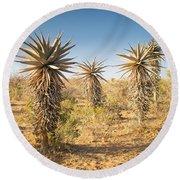 Aloe Vera Trees Botswana Round Beach Towel