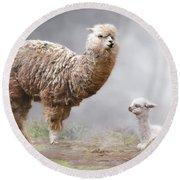 Alpacas Mum And Baby Round Beach Towel
