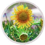 Alpine Sunflower In Summer Round Beach Towel