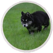 Alusky Puppy Creeping Through Green Grass Round Beach Towel