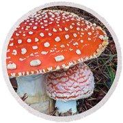 Amanita Muscaria - Red Mushroom Round Beach Towel
