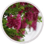 Amaranth Pink Flowering Locust Tree In Spring Rain Round Beach Towel