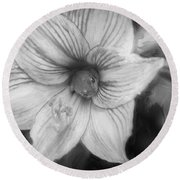 Amaryllis And Tree Frog Painted Bw Round Beach Towel