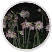 Amaryllis At Night After A Rain Round Beach Towel
