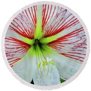 Amaryllis Beauty Round Beach Towel
