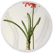 Amaryllis Curvifolia Round Beach Towel by Pierre Redoute