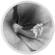 Amaryllis Flower Bloom In Black And White Round Beach Towel